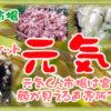 イベント情報【田尻大沢窯 店頭販売】